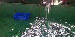 Balık İsrafında Rekor Artış: Avlanan Balığın Üçte İkisi Çöpe Gidiyor!