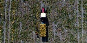 Çiftçiye 'Alım Garantili' Ürün Desteği
