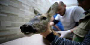 12 bini Aşkın Yabani Hayvan Tedavi Edildi