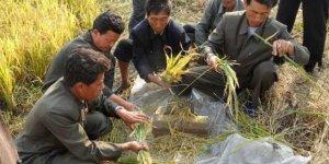 Kuzey Kore'de Gıda Krizi