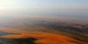 Planktonların Çoğalmasıyla Deniz Turuncu Oldu