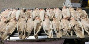 Avustralya'da 60'tan Fazla Kuş Ölü Bulundu