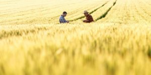 Üniversiteli Çiftçilere 100 Bin Liraya Kadar Hibe