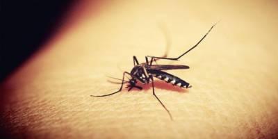Tarihte En Fazla İnsan Ölümüne Sivrisinekler Sebep Oldu