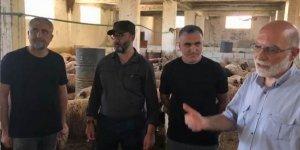 Özgür-Der Gönüllülerinin Kurbanları İdlib'te Kesiliyor