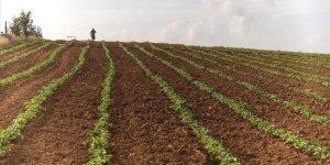 Filistin Hükümetinden İşgalci İsrail'e Bağımlılığı Sonlandıracak Tarımsal Kalkınma Projesi