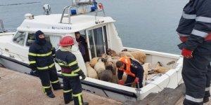 Binlerce Koyun Taşıyan Yük Gemisi Romanya Açıklarında Alabora Oldu