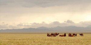 Avustralya'daki Deve Katliamına Atlar da Dahil Edildi