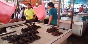 Çin'deki Yabani Hayvan Satışı ve Tüketimi Hedefte