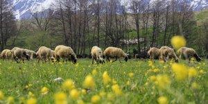 İlkbaharın Gelişiyle Ovacık'ta Güzel Manzaralar Oluştu