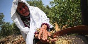 Gazze'de Ramazan Sofralarını Süsleyen Lezzet 'Firik'