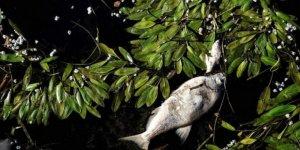 Nestle Fransa'da binlerce balığın ölümünden sorumlu tutuluyor