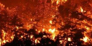 Orman yakmak savaşlarda bile bir insanlık suçu