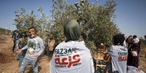 Filistinliler, işgalcilerin zeytin bahçelerine yönelik saldırılarına imece usulüyle karşı koyuyor