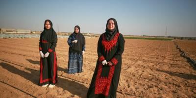 Gazze'de işsiz üniversite mezunları, tarıma yöneldi