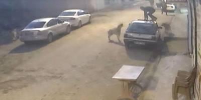 Sokak hayvanlarının popülasyonunda ciddi bir artış var