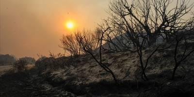 Dünya yoğunluğu artan orman yangınlarının etkisi altında