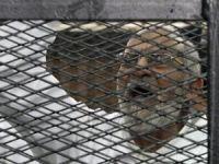Mısır'da İslami Direniş ve Sünnetullah Çizgisi