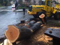 Sarıyer Belediyesi Villa İçin Ağaçları Kesti