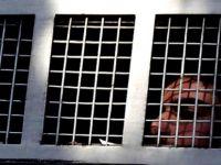 İşgalciler Kassam Üyelerine İki Müebbet ve 30 Yıl Hapis Cezası Verdi