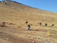PKK'dan Sınır Köylere Provokasyon Talimatı