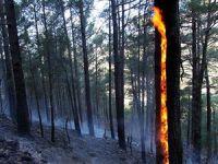 Tazmanya'da Ormanlar Yanarak Kül Oluyor!