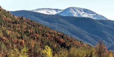 Kâğıtta Geri Dönüşüm Yılda 25 Milyon Ağacı Kurtarıyor
