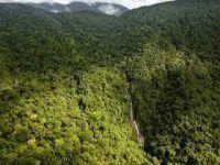Asya-Pasifik'te Yağmur Ormanları Kıyımı