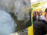 İtalya'da Depremzede Çiftçiler Hükümeti Protesto Etti