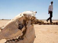 """Somaliland'da Kuraklık: """"Çocuklarıma Sadece Çay Verebiliyorum"""""""
