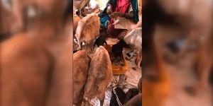 Somali'de Kuraklık: Keçiler Karton Yerken Görüntülendi!