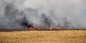 Esed Güçleri Tarım Arazilerine Saldırıyor!
