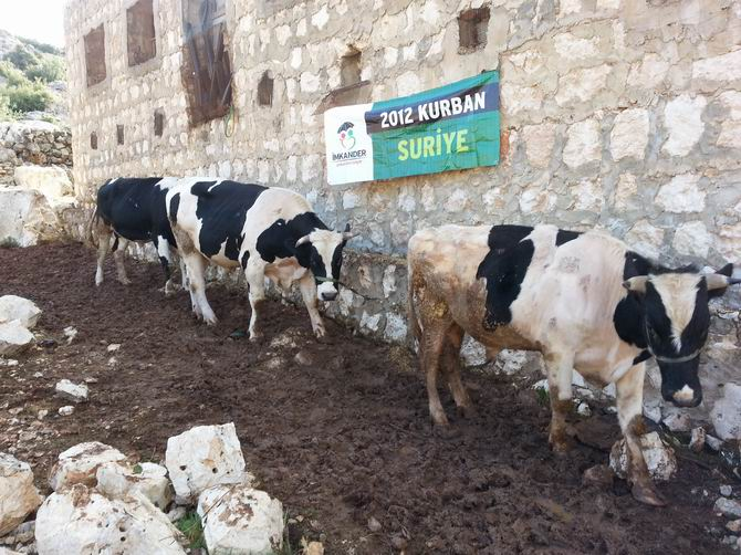 imkander-201211-01-1.jpg
