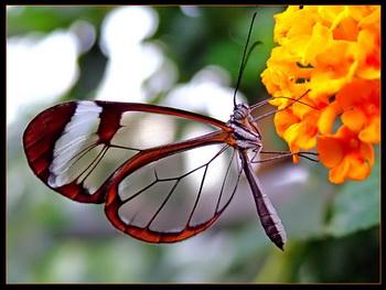 sediyani-20120123-25.jpg