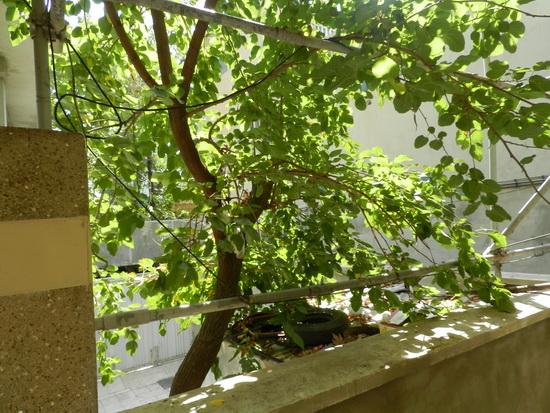 sediyani-20120205-14.jpg