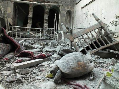 suriye-syria-homs-humus_kaplumbaga.jpg