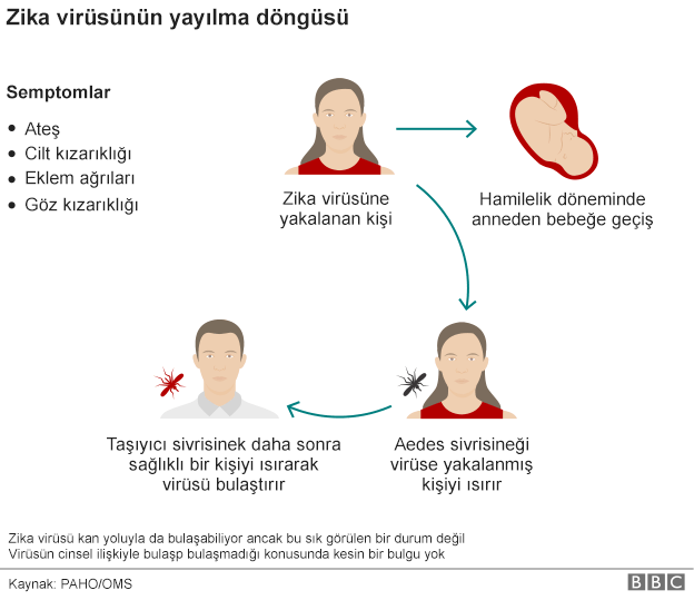 zika_virusu_yayilma_dongusu.png